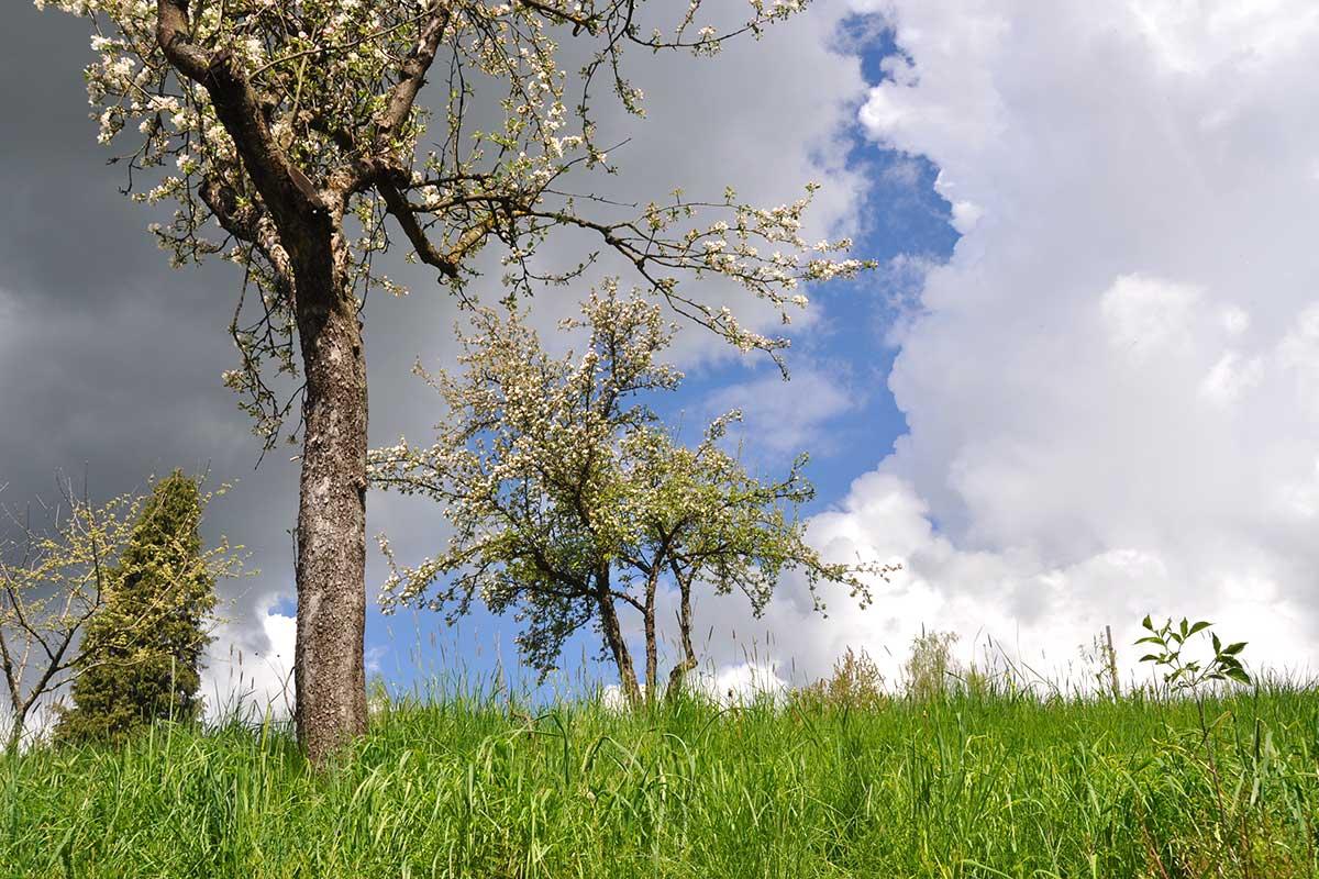 ObstbaumGewitterwolke0118