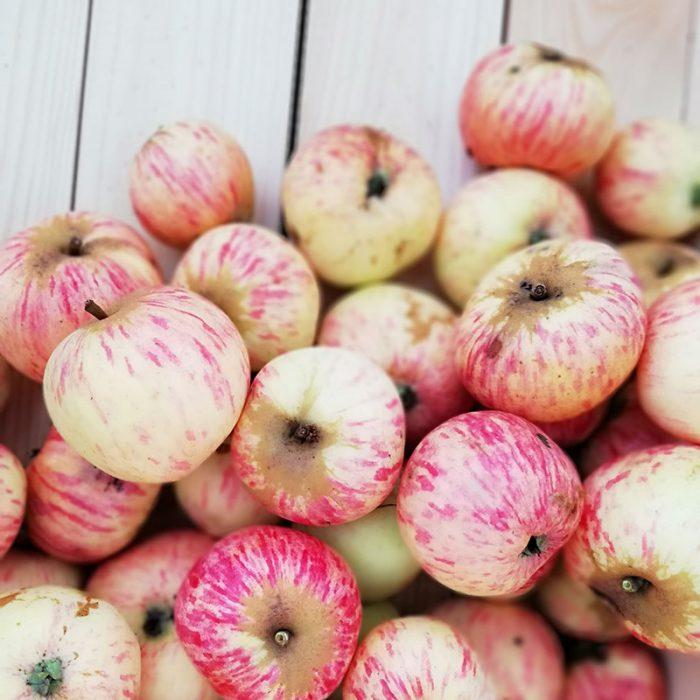 Apfelsorte, sehr früh, unbekannt, Foto C. Bisich