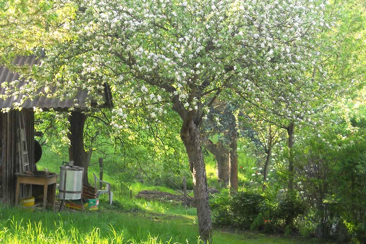 Biegl_Garten