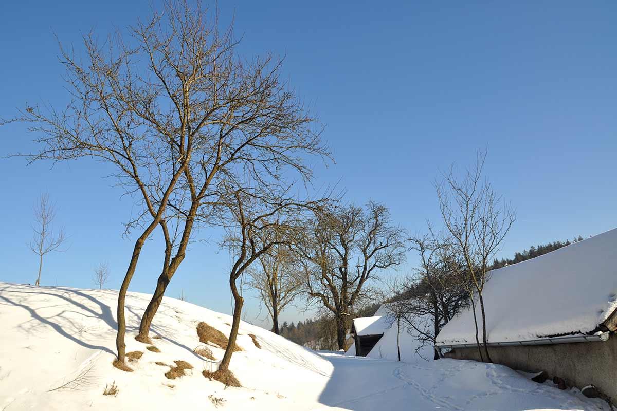 Campus_Streuobstwiese_hinternHaus_Winter