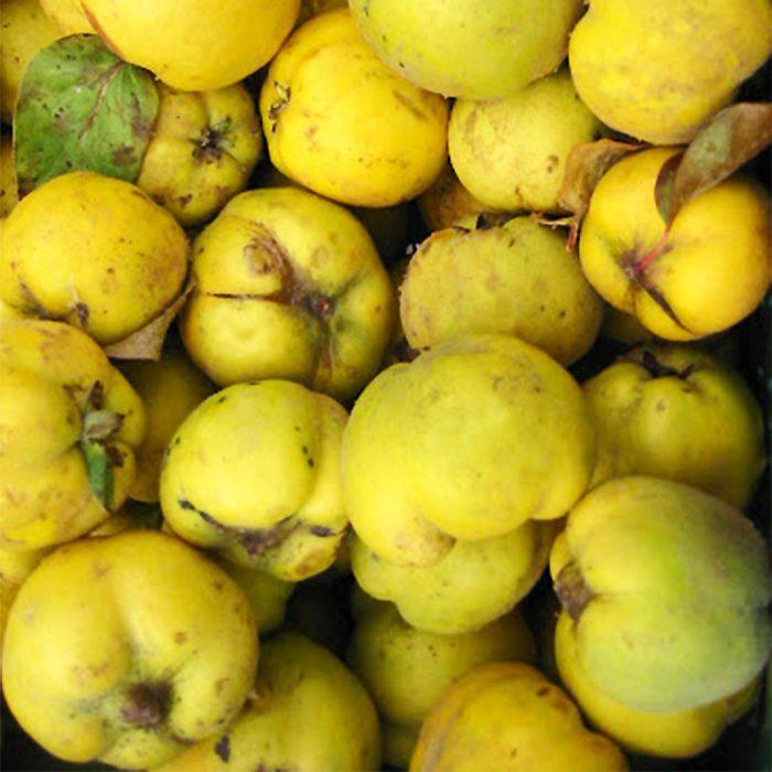 Quitten Früchte